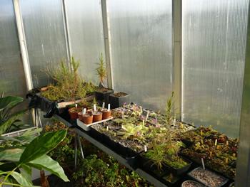 Serre plantes carnivores